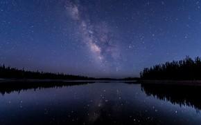 Картинка лес, небо, звезды, ночь, река, Млечный путь
