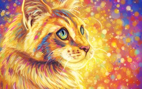 Картинка кошка, пушистая, разноцветный фон