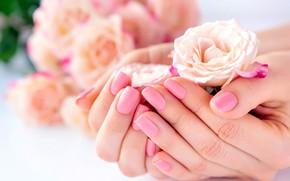 Картинка розы, руки, маникюр