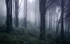 Картинка лес, природа, туман