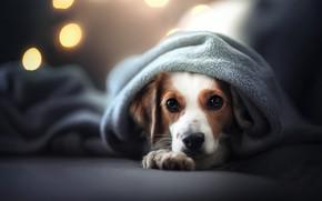 Картинка взгляд, морда, собака, плед