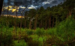 Картинка зелень, лес, деревья, закат, ветки, тучи, заросли, берег, болото, сосны, кусты, водоем, бор, хмурое небо, …