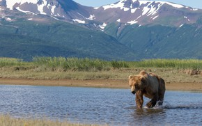 Картинка поза, медведь, взгляд, горы, природа, мишка, прогулка, берег, бурый, морда, водоем, река, пейзаж