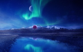 Картинка небо, ночь, рендеринг, дерево, северное сияние