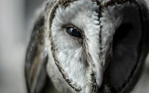 Картинка Сова, Птица, Глаза, Клюв, Wild, Owl, Bird, Animal, Daniel Ap, by Daniel Ap