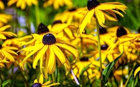 Картинка лето, цветы, жёлтые