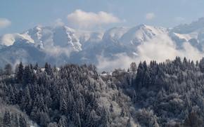 Картинка Зима, Горы, Лес
