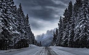 Картинка зима, дорога, лес, деревья, горы, Timothy Poulton