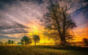 Картинка небо, трава, деревья, закат, природа, весна