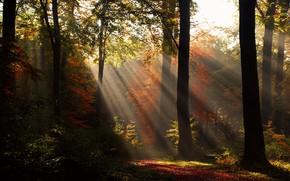 Картинка осень, лес, свет, деревья