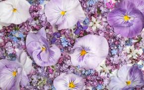 Картинка цветы, розовые, белые, анютины глазки, много, сирень, сиреневые, незабудки, композиция, виолы
