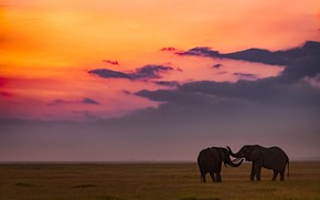 Картинка поле, небо, закат, пара, слоны, два, два слона