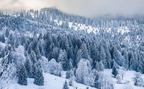 Картинка зима, иней, лес, снег, деревья, горы, природа, туман, холмы, склоны, даль, ели, мороз, сугробы, дымка, …