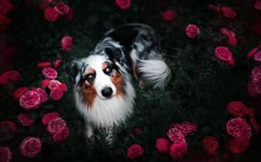 Обои цветы, друг, собака