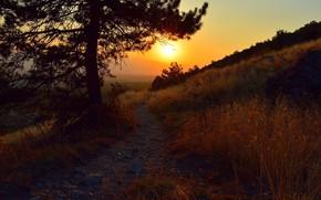 Картинка Закат, Дерево, Тропинка, Tree, Sunset, Степь, Path