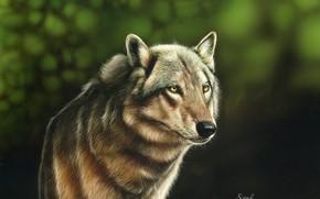 Картинка волк, размытый фон, by shonechacko