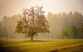 Картинка осень, деревья, туман, утро, Германия