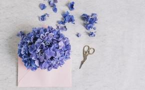 Картинка цветы, букет, Purple, flower, pink, конверт, декор, hydrangea, envelope