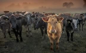Картинка народ, скот, стадо