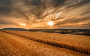 Картинка поле, закат, природа