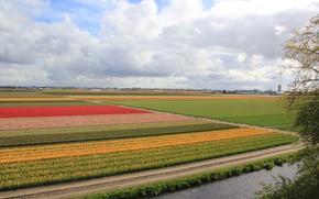 Картинка фото, Природа, Поля, Нидерланды, Разноцветные, Keukenhof Gardens