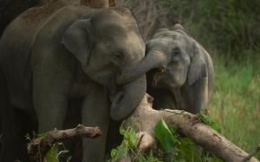 Картинка коряга, слоны, слонята