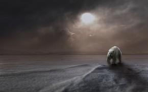 Картинка зима, белый, солнце, снег, горы, туман, рендеринг, медведь, белый медведь, Арктика