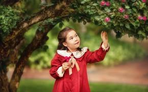 Картинка листья, цветы, природа, дерево, платье, девочка, ребёнок, Анастасия Бармина