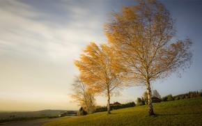 Картинка дорога, осень, лес, небо, облака, деревья, природа, ветви, вид, даль, Австрия, склон, деревня, луг, простор, …