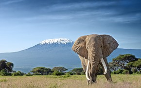 Картинка слон, гора, бивни