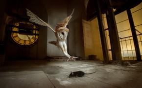 Картинка сова, птица, мышка