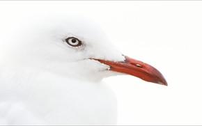 Картинка animals, bird, albino