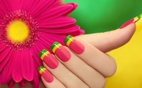 Картинка цветок, рука, маникюр, гербера