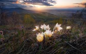 Картинка пейзаж, цветы, горы, туман, рассвет, склоны, весна, утро, Россия, поселение, анемоны, ветреница