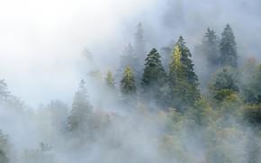 Картинка лес, деревья, горы, туман