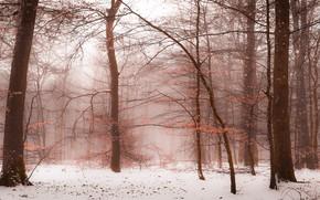 Картинка зима, лес, снег, ветки, природа, туман, настроение, ветви, стволы, листва, зимний, дымка, поздняя осень, деевья