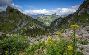 Картинка пейзаж, цветы, горы, природа, красота, луг, панорама