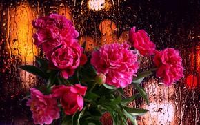 Картинка капли, цветы, дождь, настроение, букет, Пионы