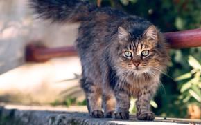 Картинка кошка, кот, взгляд, листья, свет, поза, бетон, мордашка, пятнистая