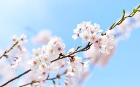 Картинка небо, весна, сакура, macro, sakura, spring, branch