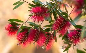 Картинка листья, цветы, ветки, красные, цветение, боке, экзотические
