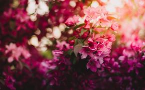 Картинка Flower, Wallpaper, Macro