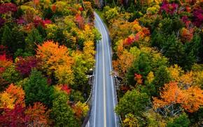 Картинка дорога, осень, лес, деревья, Vermont, Вермонт, Smugglers Notch