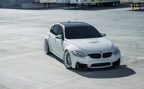 Картинка BMW, White, Sight, F81