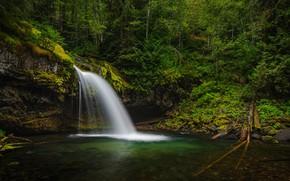 Картинка лес, река, водопад, Gifford Pinchot National Forest, Washington State, Штат Вашингтон, Река Айрон, Iron Creek …