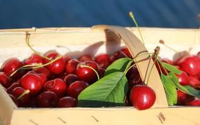 Картинка листья, вишня, ягоды, корзинка, красная, много, черешня