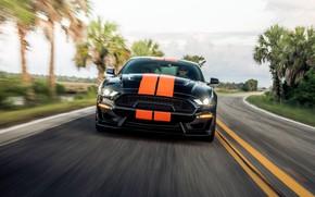 Картинка скорость, Mustang, Ford, Shelby, вид спереди, GT-S, 2019