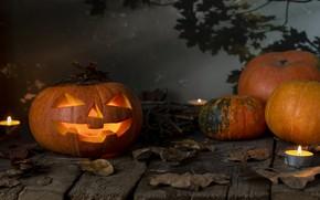 Картинка осень, листья, тыква, Хэллоуин, halloween, autumn, leaves, pumpkin