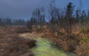 Картинка осень, природа, река