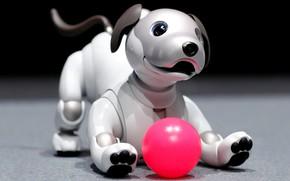Обои взгляд, морда, поза, темный фон, розовый, игрушка, игра, мяч, механизм, робот, собака, лапы, щенок, мячик, ...